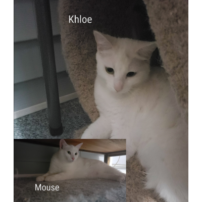 Mouse and Kloe
